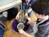 Sieving mud to find the different animals (some large and some very small) that live in a mudflat