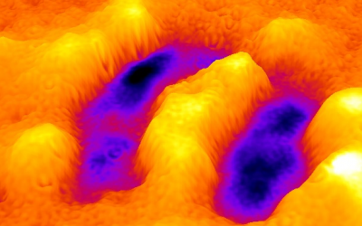 Real-time imaging of cellular forces using optical interference