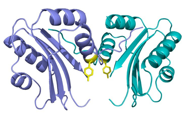 proteins research paper Research papers acta crystallographica section d biological crystallography  issn 0907-4449 structures of the hiv-1 capsid protein dimerization domain at.